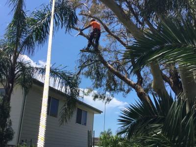 tree-pruning-1-400