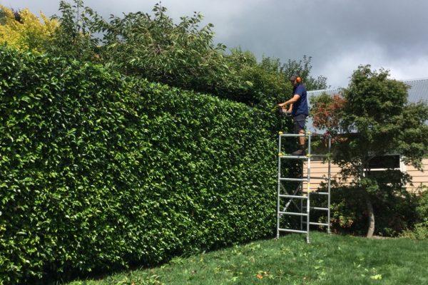 hedging 10