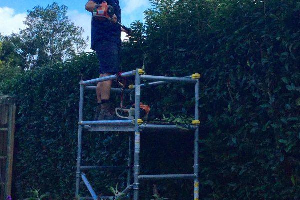 hedging 11