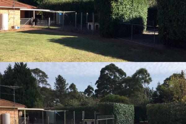 hedging 12