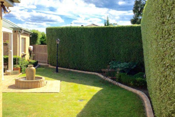 hedging 7