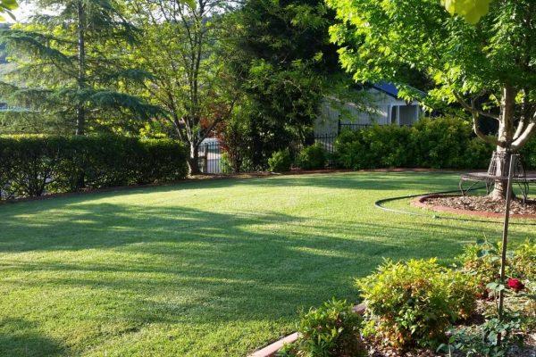 garden-clean-up-maintenance