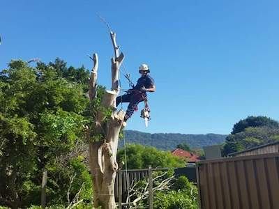 Tree Removal Bowral