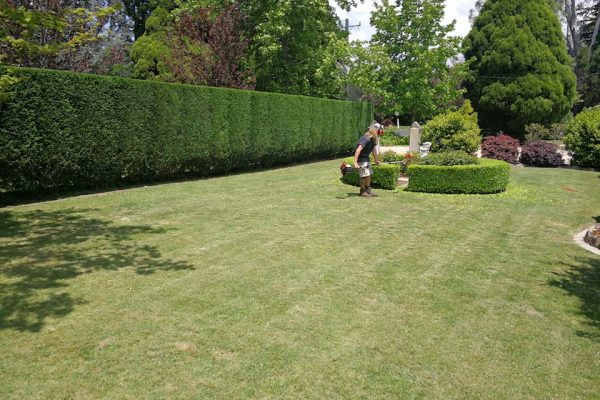 Hedge Trimming Moss Vale