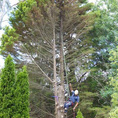 Tree Pruning Bowral