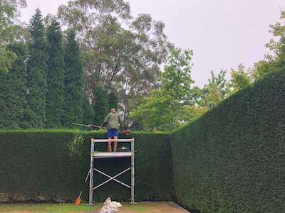 Hedge Trimming Bowral