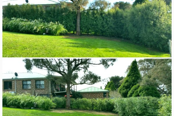 hedging 5