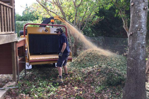 mulching pic